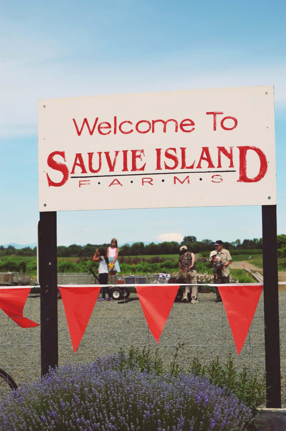Sauvie Island // Strawberry Tart