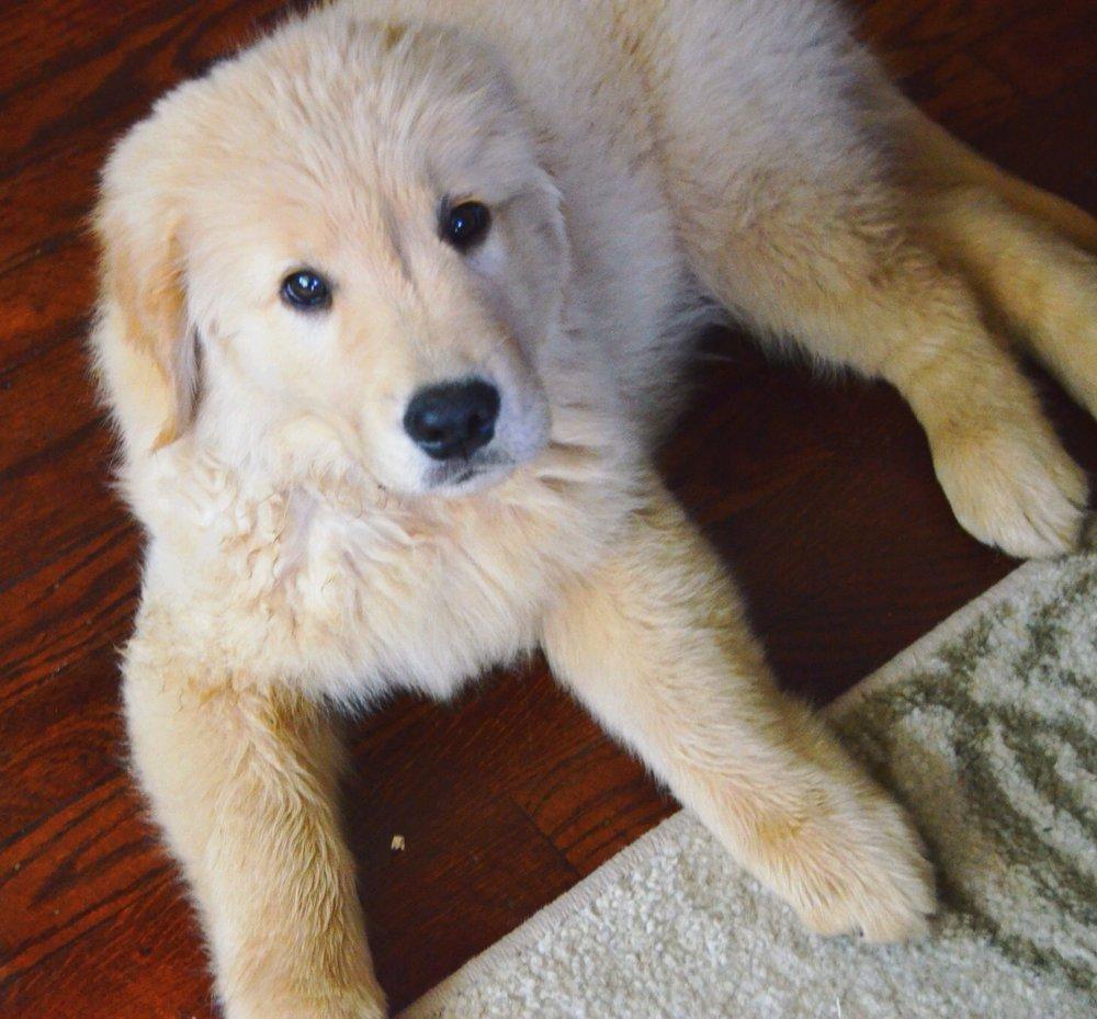 Pumpkin Doggie Treats // A Week With Cooper