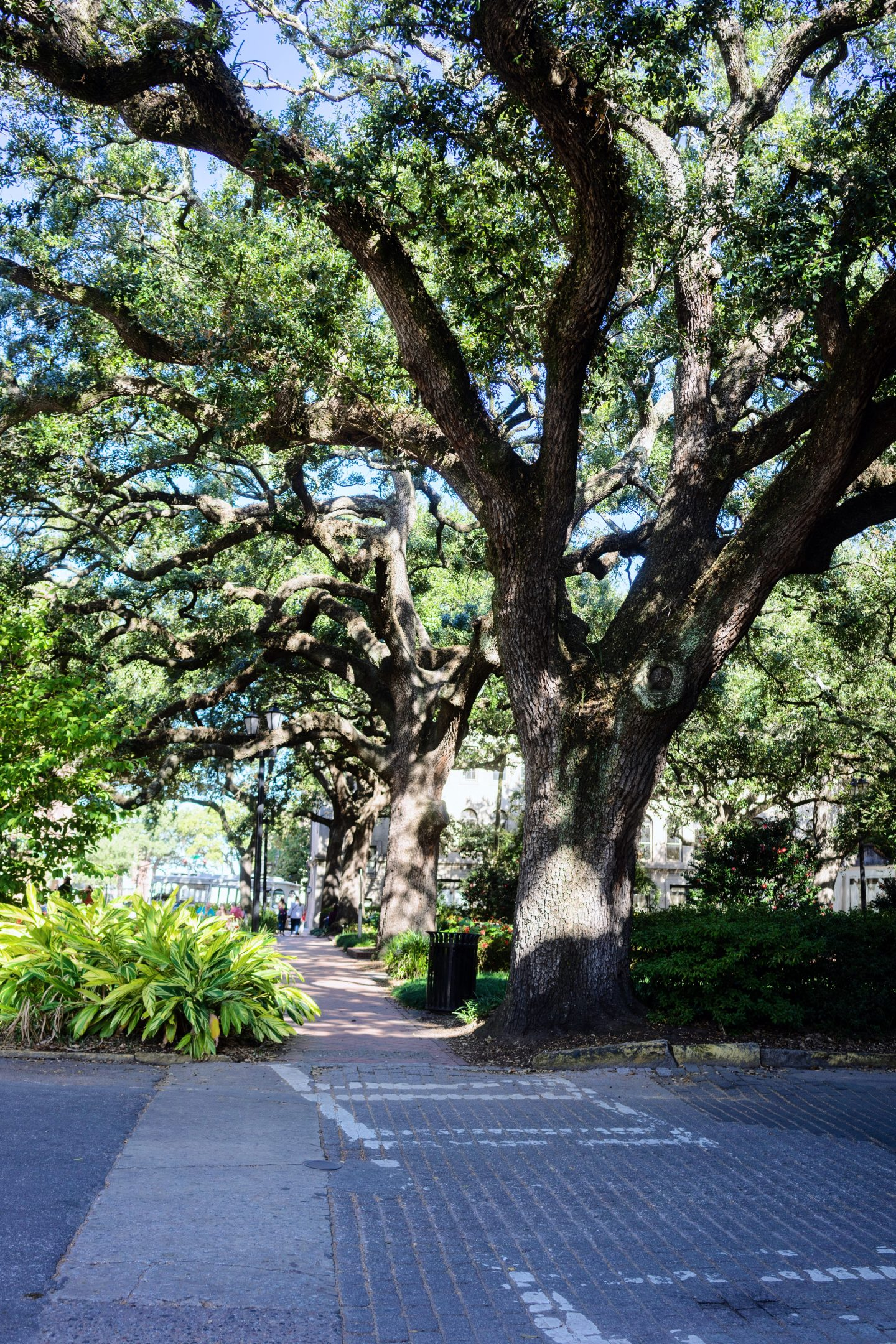 24 Hours in Savannah